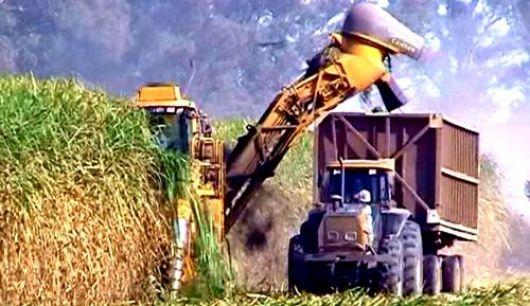 Producción de bioetanol y energía de residuos forestales