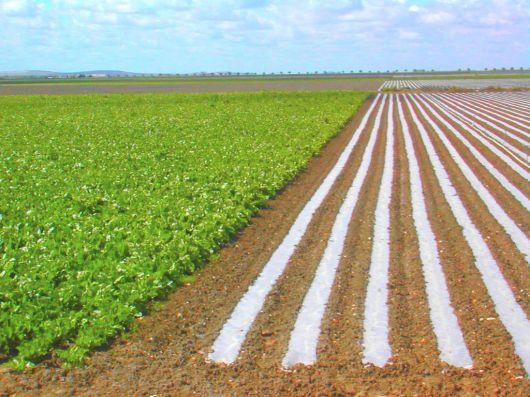 """Soluciones demagógicas están """"paralizando"""" las iniciativas de los agricultores"""