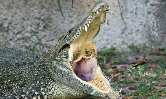 Un cocodrilo mata a 19 pasajeros