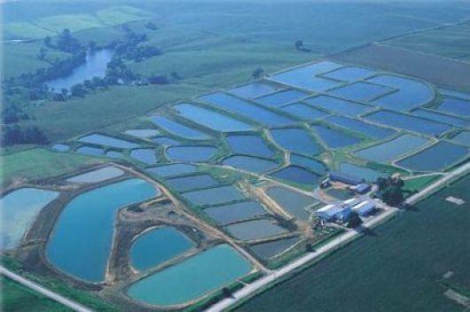 S ntesis corrientes corrientes apunta a la for Elaboracion de estanques para piscicultura