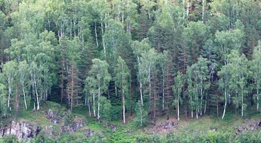Rusia: Encuentran 248 fetos en un bosque