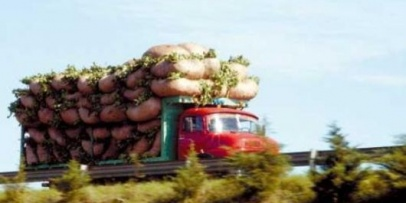 Es ley el envasado en origen de la yerba mate