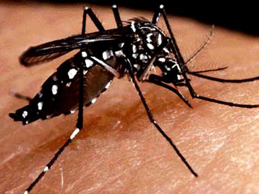 <p>Comenz&oacute; la etapa de mayor propagaci&oacute;n de dengue</p>