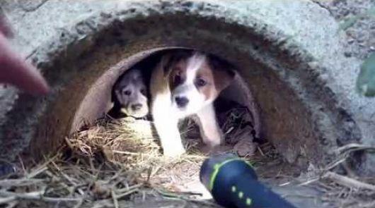 <p>Monte Caseros se queda sin Protectora de Animales por la desidia social y Estatal</p>