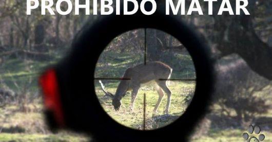 Condenaron a dos cazadores a seis meses de prisión por matar a un ciervo axis